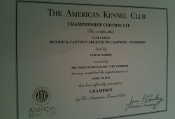 argento-champion-certificate
