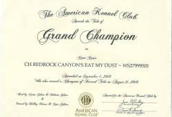 Grand-Champion-certificate-Dusty