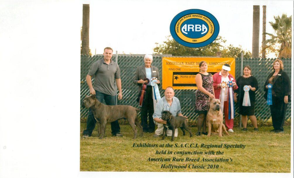 cane corsos at ARBA show