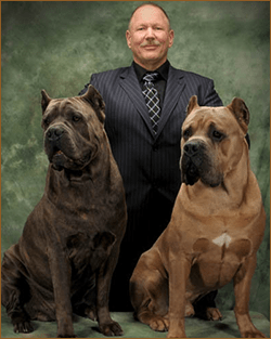 cane corso breeders red rock canyon cane corso breeder red rock