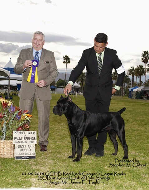 Best of Breed Corso