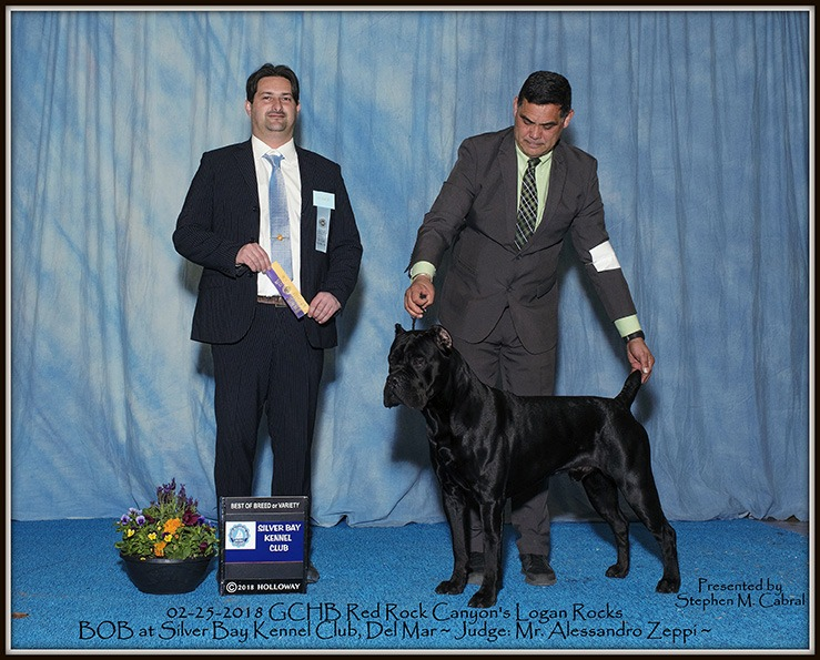 Best of Breed Cane Corso