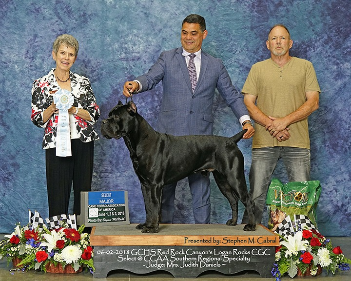 Curt Gebers with Cane Corso Logan