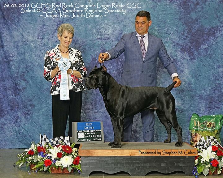 Cane Corso award