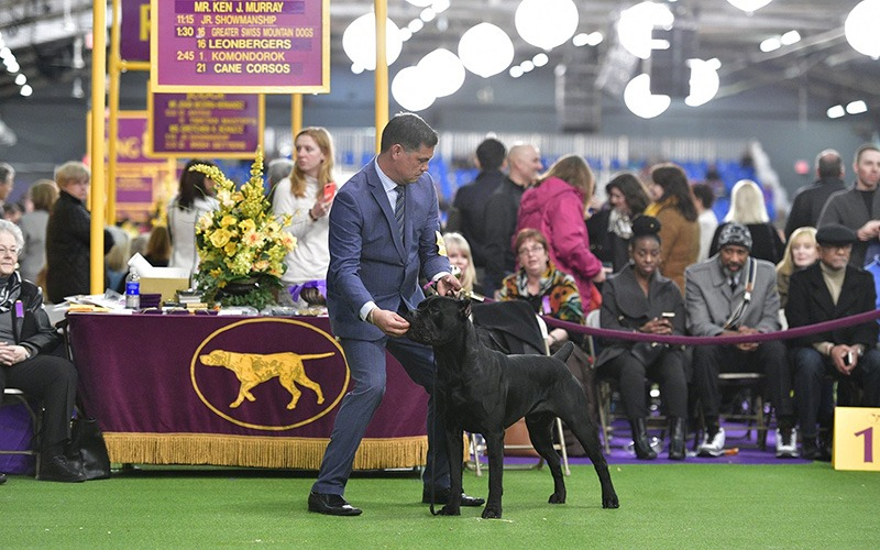 At the Westminster Kennel Club Dog Show 2018