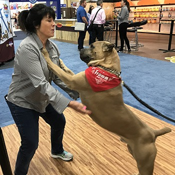 Cane Corso GCh Max & Jeanne Wilkey from Fromm